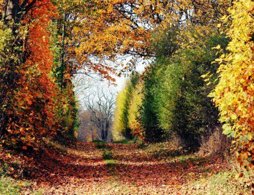 """Fotowettbewerb """"Waldkirchen im Herbst"""""""
